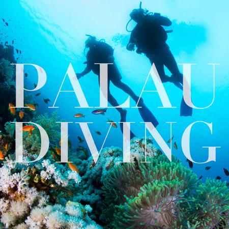 Palau Diving 无证内海水肺体验潜水1次