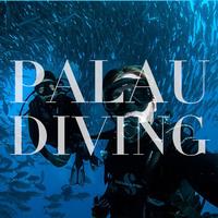 Palau Diving 无证全面罩外海体验潜水