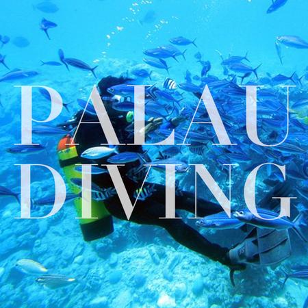Palau Diving 无证外海体验水肺潜水套餐